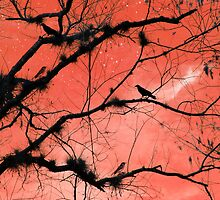 Peach Sky by Rosalie Scanlon