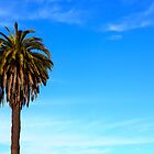 Palmtree in the blue sky by creativedesignz