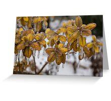 Ice Storm 2013 - Frozen Azalea Leaves  Greeting Card