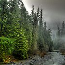 In Deep Thought ~ Quartzville Creek ~ by Charles & Patricia   Harkins ~ Picture Oregon