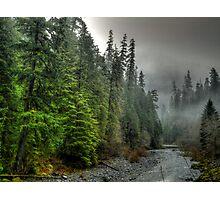 In Deep Thought ~ Quartzville Creek ~ Photographic Print