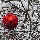 Red Ornament by Sheri Nye