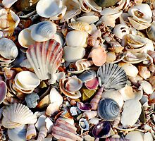 Colourful Shells at Beer Barrel Beach by Imi Koetz