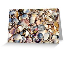 Colourful Shells at Beer Barrel Beach Greeting Card