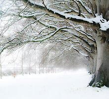 Winter Beeches by solsticemoon