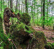 Old stump by Tilyo Rusev