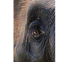 Elephant Lashes Photographic Print