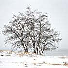 Frosty Trees At The Beach by BarbL