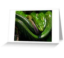 Green Tree Python Greeting Card