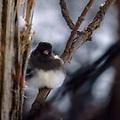 Junco On Twig by Deb Fedeler