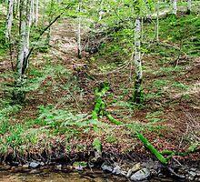 Fallen tree by Tilyo Rusev