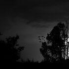 Bat Lightning by Marc  Rossmann