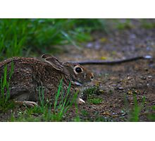 Peter Cotten Tail Photographic Print