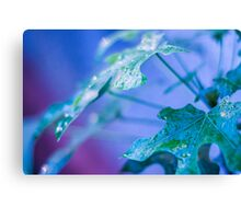 Raindrops beauty Canvas Print