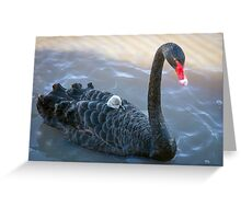 Mother Love at Laurimar Lake  Greeting Card