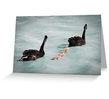 The Swan Family of Laurimar Lake Greeting Card