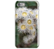 Angophera hispida (Dwarf Apple) iPhone Case/Skin