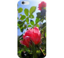 pink in the blue iPhone Case/Skin