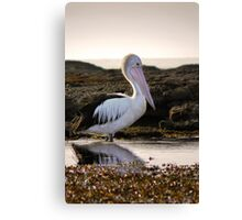 Pelican morning Canvas Print
