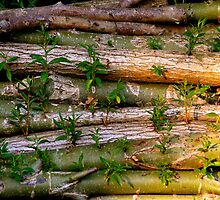 Willow Logs by Jack Crinks