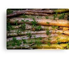 Willow Logs Canvas Print