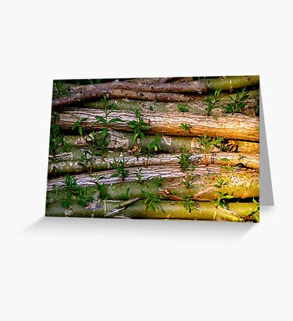 Willow Logs Greeting Card