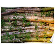 Willow Logs Poster