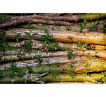 Willow Logs Photographic Print