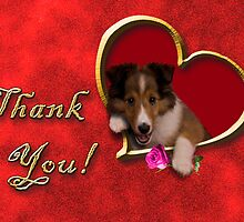 Thank You Sheltie by jkartlife