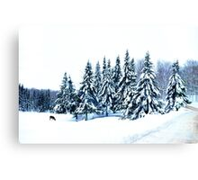 Piece on Earth ! Canvas Print
