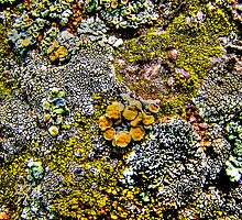 """Rock and Lichen Abstract"" by Dee Carmack"