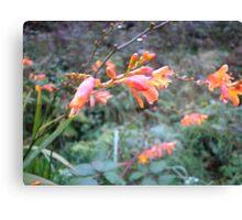 Irish Wildflowers Canvas Print