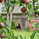 Old Orchard Barn by Johanne Brunet