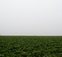 Strawberry Field in Salinas, California Sticker