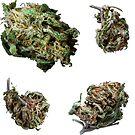420 Buds #67 by sensameleon