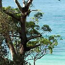Turquoise and teal blue, Jervis Bay National Park by Jane McDougall