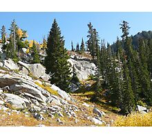 Autumn Pines on the Rocks Photographic Print