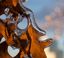 Toronto Ice Storm 2013 - Oak Leaf Jewels by Georgia Mizuleva