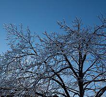 Toronto Ice Storm 2013 - Shiny, Icy Tree Branches by Georgia Mizuleva