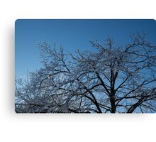 Toronto Ice Storm 2013 - Shiny, Icy Tree Branches Canvas Print