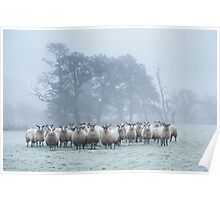 Are ewe talking to me? Poster