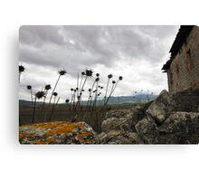 Italian Weeds Canvas Print