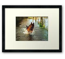 It's A Dogs Life Framed Print