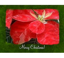 Mottled Red Poinsettia 1 Ephemeral Merry Christmas P1F1 Photographic Print