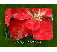 Mottled Red Poinsettia 1 Ephemeral Merry Christmas P1F5 Photographic Print