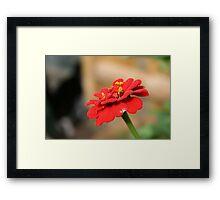 hello flower Framed Print