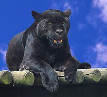 Black Jaguar by amira
