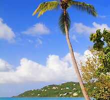 Magens Bay Beach, St. Thomas by Roupen  Baker