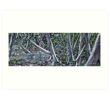 Swamp of the White Cedars Art Print
