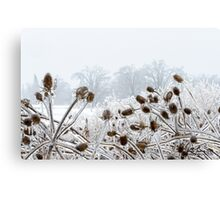 Snowy contrasts Canvas Print